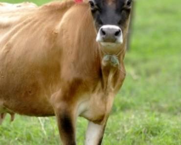 dairy-alternatives